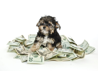 Dog-with-money-dollar-bills