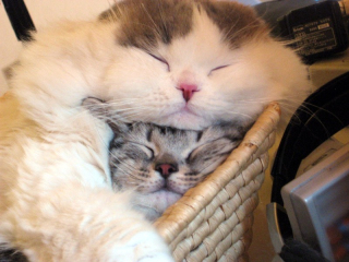 Cat%20and%20Kitten%20in%20Basket